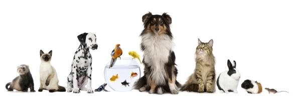 produits-veterinaires-bg